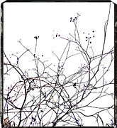 Wintertime Framed Prints - Stems Framed Print by Bernard Jaubert