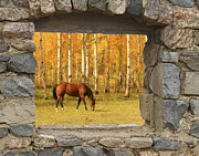 Autumn Decorations Posters - Stone Window View and Beautiful Horse Poster by James Bo Insogna
