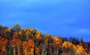 Stormy Sky Last Fall Color Print by Thomas R Fletcher