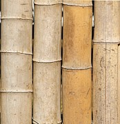 Bamboo Fence Photo Posters - Straight Bamboo Poles Poster by Yali Shi