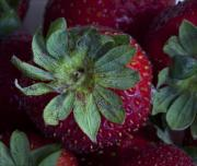 Strawberry Art Metal Prints - Strawberry 2 Metal Print by Robert Ullmann