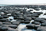 Shark Bay Prints - Stromatolites Print by Georgette Douwma
