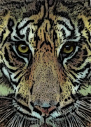 Cats Digital Art Digital Art Prints - Sumatran Tiger Print by Arline Wagner