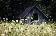 Meadow Posters - Summer Barn Poster by Rob Travis
