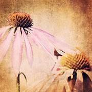 Flower Picture Posters - Summer Feeling Poster by Angela Doelling AD DESIGN Photo and PhotoArt
