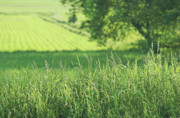 Peaceful Scenery Prints - Summer fields of green Print by Sandra Cunningham