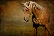 Wild Horse Posters - Sundance Poster by Lyndsey Warren