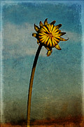 Melany Sarafis Digital Art Posters - Sunflower Poster by Melany Sarafis