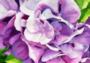 Snowball Paintings - Sunlit Hydrangea by Janis Grau