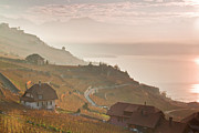 Vineyard Photos - Sunrise At Lavaux Vineyard Terraces by Harri