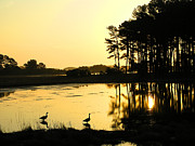 Island Print Framed Prints - Sunrise Over Assateague Framed Print by Steven Ainsworth