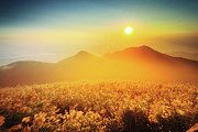 Sun In Cloud Prints - Sunset And Silver Grass Blossoms Print by Joyoyo Chen