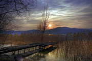 Weed Metal Prints - sunset at the Lake Maggiore Metal Print by Joana Kruse