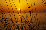 Backdrop Prints - Sunset Print by Carlos Caetano