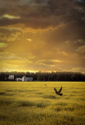 Sandra Cunningham - Sunset on the prairies with fields of rapeseed