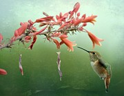 Tiny Bird Photos - Suspension by Fraida Gutovich