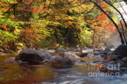 New Hampshire Posters - Swift River - White Mountains New Hampshire USA Poster by Erin Paul Donovan
