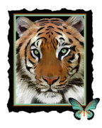 Endangered Cat Posters - Tabby Poster by Frances Guzzetta