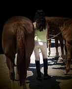 Dressage Photos - Tails by Steven  Digman