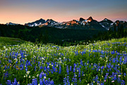 Tatoosh Dawn Print by Mike  Dawson