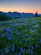 Aster  Acrylic Prints - Tatoosh Sunrise Acrylic Print by Mike  Dawson