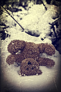 Hiding Photo Posters - Teddy In Snow Poster by Joana Kruse