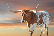 Texas Longhorn Photos - Texas Icon by Robert Anschutz