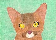 Cats Drawings Originals - The Abyssinian by Eric Forster