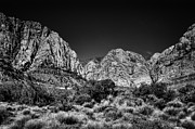 Burros Metal Prints - The Beautiful Red Rock Canyon Metal Print by David Patterson
