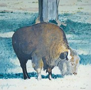 Bison Originals - The Bison by Terry Forrest