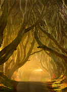 Antrim Framed Prints - The Dark Hedges III Framed Print by Pawel Klarecki