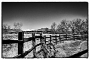 South Platte River Prints - The Fence Line at South Platte Park Print by David Patterson