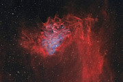 Auriga Prints - The Flaming Star Nebula Print by Rolf Geissinger