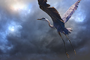 Blue Heron Framed Prints - The Flight Of Titans Framed Print by Ron Jones