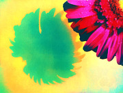 The Gerbera Print by Odon Czintos