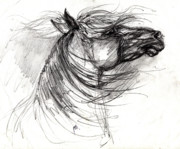 Head Drawings Prints - The Horse Sketch Print by Angel  Tarantella
