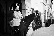 Household Cavalry Posters - The Household Cavalry Life Guards on guard duty in Whitehall London England UK United kingdom Poster by Joe Fox