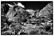 Burros Metal Prints - The Landscape of Red Rock Canyon Nevada Metal Print by David Patterson