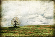 Old Country Roads Prints - The Lone Tree Print by Darren Fisher