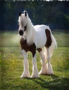 Gypsy Horse Prints - The Lovely Cristal Print by Terry Kirkland Cook