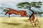 Wildlife Drawings - The Lunge by Peter Piatt