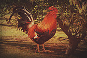 Crowing Posters - The Mighty Rooster Poster by Carolyn Rauh