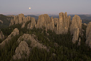 Custer State Park Prints - The Needles Protrude From Forests Print by Phil Schermeister