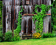 Old Doors Framed Prints - The Old Shed Framed Print by Perry Webster