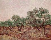 Brushstrokes Posters - The Olive Pickers Poster by Vincent van Gogh