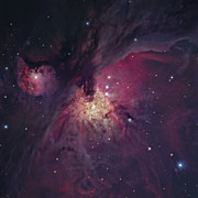 Orion Nebula Framed Prints - The Orion Nebula Framed Print by Robert Gendler