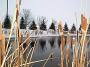 Bulrushes Prints - The Pond Print by Pat Purdy