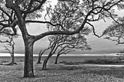 Tree Roots Photo Prints - The Reach Print by Debra and Dave Vanderlaan