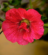 Plant Greeting Cards Prints - The Red One Print by Robert Bales