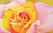 Close Up Painting Posters - The Rose Poster by Myung-Bo Sim